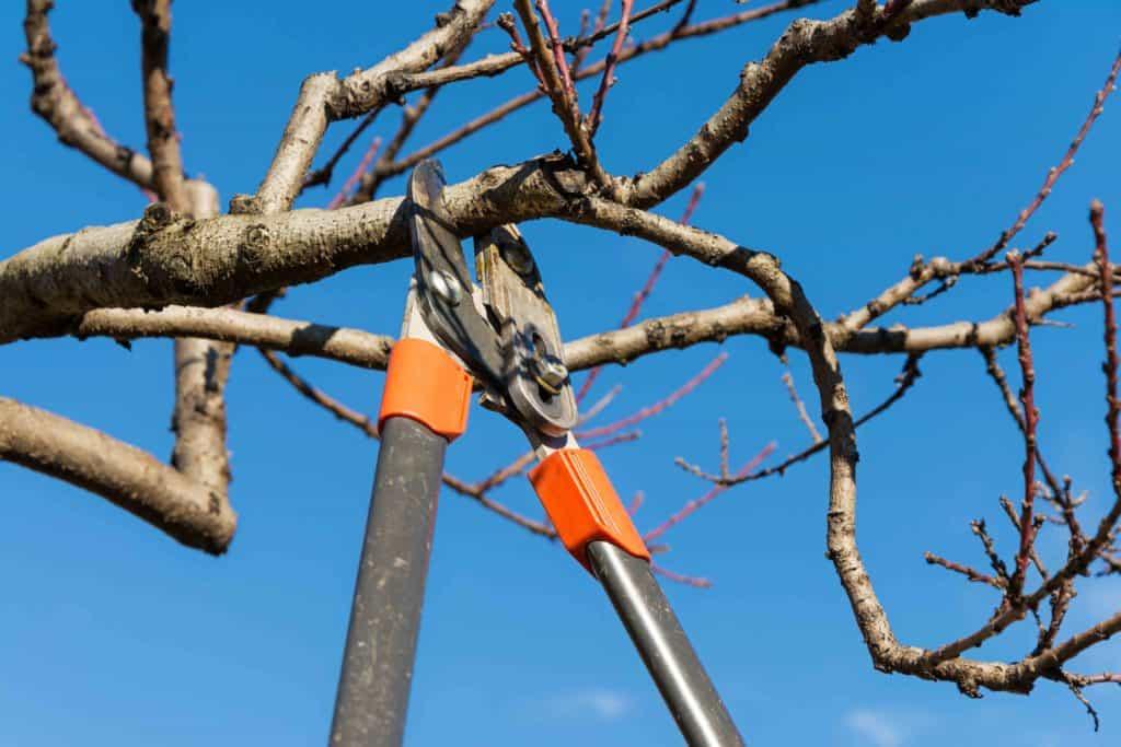 Tree being pruned